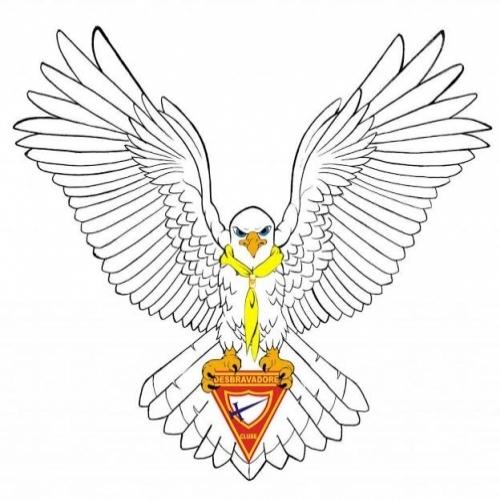 Falcão Branco