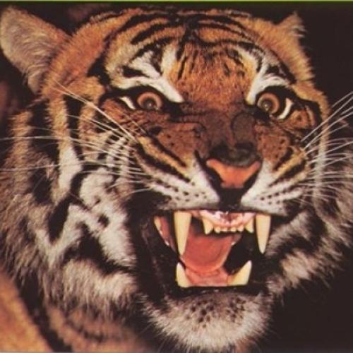 Vale do Tigre